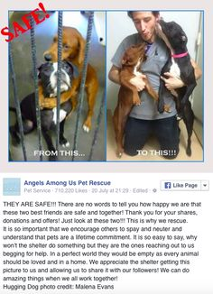 Saved! Dogs Pictured Hugging As They Wait To Be Put Down Are Finally Adopted - Yahoo News