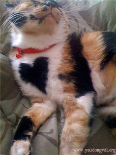 Calico cats have unusual markings.....nature or photshop??