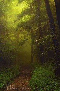 A legszebb erdők Magyarországon/Beautiful forests in Hungary Old Trees, Beautiful Forest, Homeland, Hungary, Budapest, Travel Inspiration, Street Art, Scenery, Places To Visit