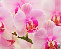 Risultati immagini per orchidee