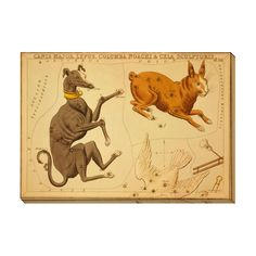 Gallery Direct Canis Major Lepus Columba Noachi and Cela Sculptoris Gallery Wrapped Canvas
