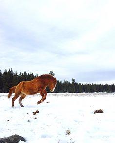 Horsepower by liammcdonald - 800 Horses Photo Contest