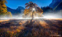 Magical Fall Morning, Yosemite National Park