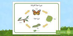 بساط مفردات دورة حياة الفراشة Arabic Kids Cartoon Pics Coloring Download