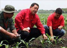 """Chávez en comuna """"El Maizal"""", parte del proyecto socialista participativo en el campo de Venezuela"""