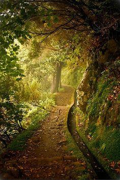 Forest Trail, Plitvice, Croatia. | #mtb  #travel #croaitia www.casademar.com