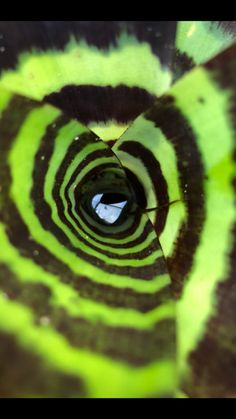 Greenhouse Pictures, Snake, Animals, Animales, Animaux, A Snake, Animal, Animais, Snakes