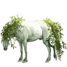 Kesällä, Pferd Mustang Dunkelfuchs #29077996 - Howrse