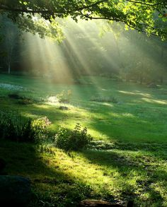 rays of sun light....