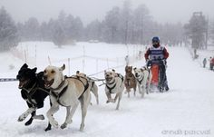 Mushing in the Lleida Pyrenees (Spain). www.lleidatur.com     Photography: @AnnaisPascual