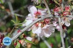 Bäume-auf-Kreta - Zorbas Island apartments in Kokkini Hani, Crete Greece 2020 Special Flowers, Crete Greece, Different Flowers, Flower Photos, Wild Flowers, Flora, Island, Spring, Gladioli