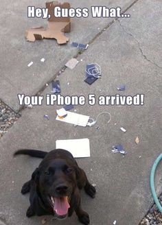 Hey, guess what ... Your iPhone 5 arrived!