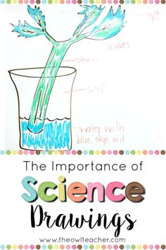 Are you using science drawings in your classroom? These drawings are important and used by both scientists and engineers. Learn everything you need to know to help your students! Science Student, Middle School Science, Elementary Science, Science Classroom, Teaching Science, Science Education, Teaching Resources, Classroom Objectives, Teaching Ideas