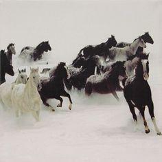 Galloping Horses Framed Canvas Art