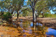 Flinders Ranges Landscape Photos, Landscape Paintings, Landscape Photography, Australia Landscape, Australian Photography, Adelaide South Australia, Woodland Art, Australian Bush, Australia Travel