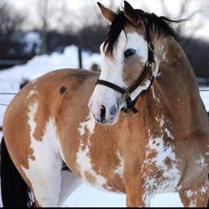 Pretty paint horse!
