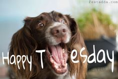 Video: Happy and excited dogs - Funny and cute dog Funny Dog Faces, Funny Dog Videos, Funny Dogs, Cute Dogs, Funny Animals, Cute Animals, Happy Animals, Happy Tuesday Images, Happy Tuesday Quotes