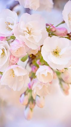 Download Wallpaper 360x640 Branch, Flowers, Spring Nokia 360x640 HD Background                                                                                                                                                                                 More