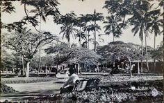 Nouméa : La place des Cocotiers