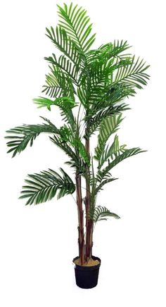 Features:  -Great look for any room or office decoration.  -Neat, hassle free and carefree just wipe clean when is needed.  -Primping required to match the image shown.  Product Type: -Tree.  Plant Ty