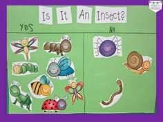 Is it an Insect? chart by Pocket of Preschool