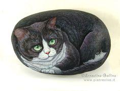 Tuxedo cat | Flickr - Photo Sharing!
