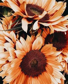 Minimalist Street Style, Minimalist Fashion, The Quiet Ones, Casual Summer Outfits For Women, Flora Flowers, Sunflower Wallpaper, Still Life Photos, Dont Call Me, Treat People With Kindness