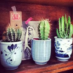 #cacti #vintage postcard #styling