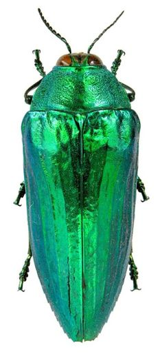 the color of insects, wow