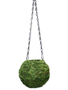 Kokedama String Gardening Kit - Japanese Moss Balls