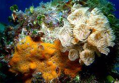 coral reef - Cuba