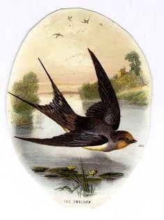 #Victorian #scraps  #ephemera #chromograph #lithograph #bird #swallow