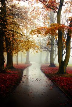 Photograph Foggy reds by Mohammed Al-Baghdadi on 500px