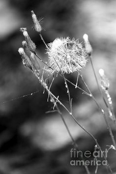 Dandy And Delicate By: Photography By Jeff Monk!