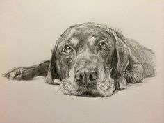 Day #4 - Graphite on card by Lucy Wilson, New Zealand. …