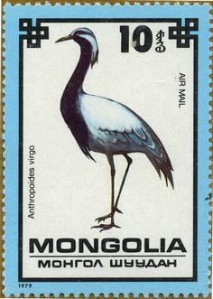 Aves raras Anthropoides virgo Grulla damisela 25/10/79 Mongolia (Rep. Pop.)