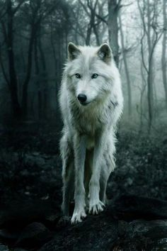 Wolf in the Forest ~