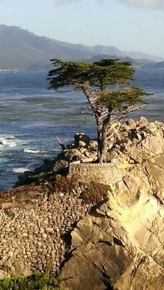 Take 17 Mile Drive (mind you have to pay to do it) and stand looking out at 'The Lone Cypress', Monterey CA. Carmel California, Monterey California, Central California, Monterey County, California Dreamin', Northern California, Monterey Cypress, Monterey Peninsula, Golden Bear
