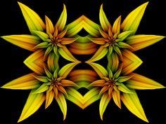 Four Flowers by Thelma1.deviantart.com on @DeviantArt