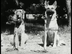 Two trainees in the 1942 film, War Dogs.  The one on the left is an Airedale.