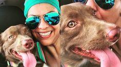 Abaixo-assinado · Azul Linhas Aéreas: Aceite levar cães de porte médio em local adequado em seus aviões. A Gol e a TAM já fazem isso! · Change.org