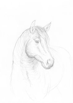 Horse pencil drawing  original OOAK drawing simple by intuicio