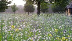 Flowers field at the Studio. Summer 2014.