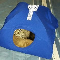 Caring for Cats – The Easy Way Diy Cat Tent, Car Tent, Cat House Diy, Cat Room, Cat Grooming, Cat Breeds, Bean Bag Chair, Dog Cat, Kitty
