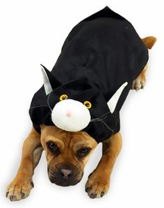 Have your own Black #Cat this Halloween with the Doggone Cat #Dog Costume with the fun kitty face on the hood.