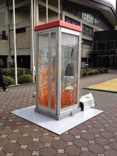 Goldfish Phone Booth in Japan (because what else are phone booths good for these days?)