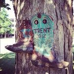 A new shoe tree has begun @ Murray State University