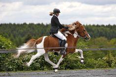 Siggi vom Kreiswald DE2001111534 - Islandpferde Gestüt Lindenhof