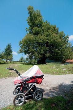 Wanderungen mit dem Kinderwagen im Chiemgau