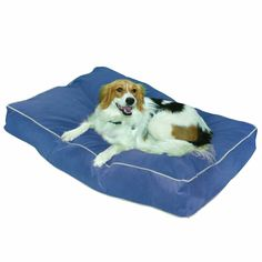 Buster Indoor/Outdoor Dog Bed >>> You can get more details by clicking on the image.